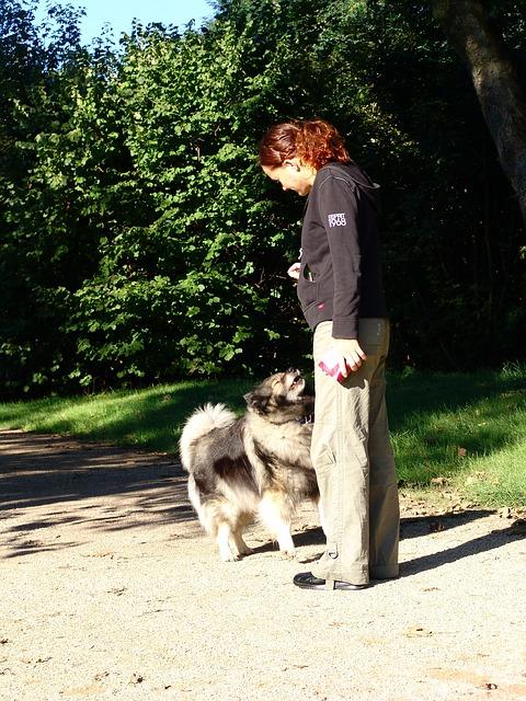 Suivre une formation en dressage canin à Fribourg